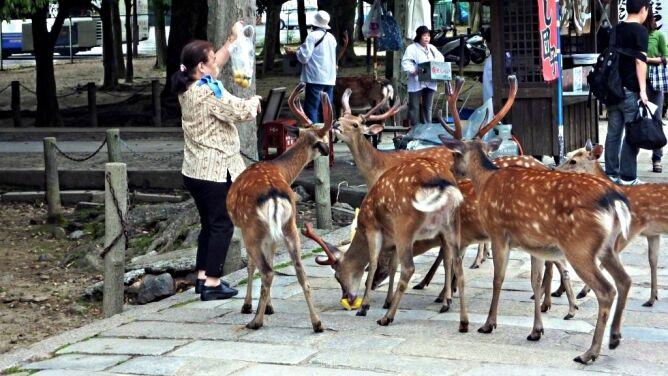 Turyści chcą zdjęcie, drażnią jelenie. Zwierzęta raniły w parku 180 osób