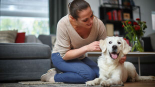 Czy alergik może mieć psa? Porady lekarzy