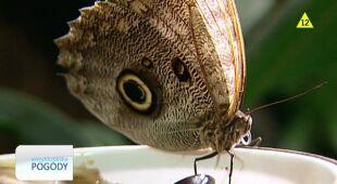 Motyle a klimat